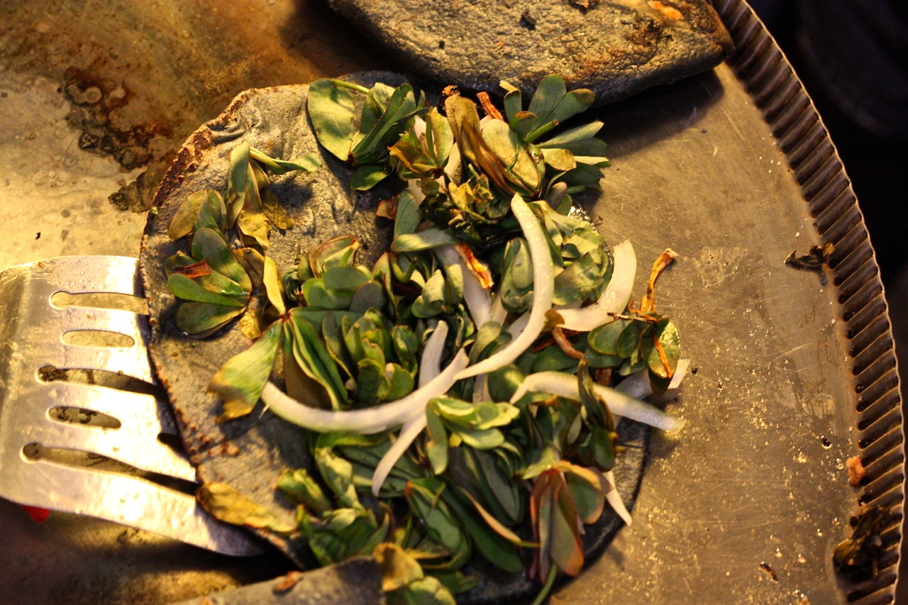 A xocoyol quesadilla, made from a plant in the Estado de Mexico